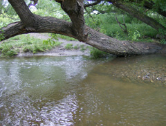 stream and tree