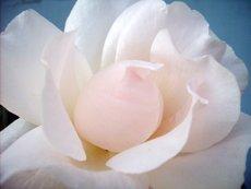 spiritual meditation flower